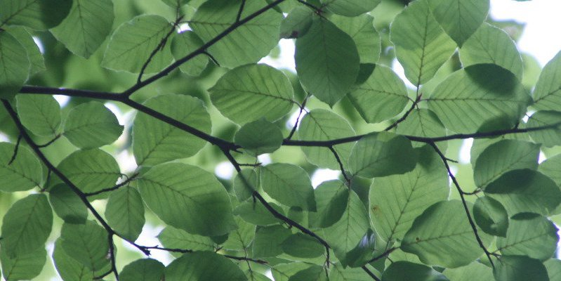 natural leaves