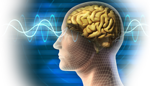 LIVE Treatment Neurofeedback Clinic and Training in Los Angeles, CA