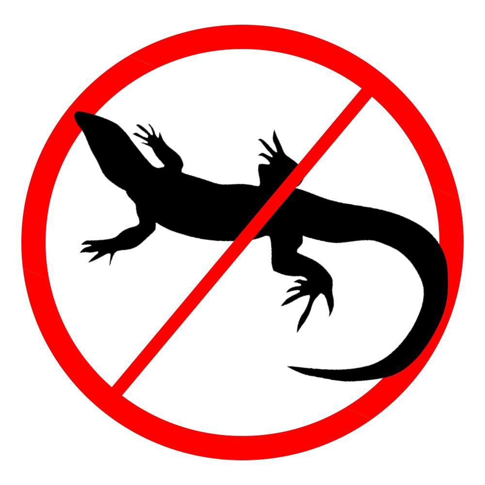 Lizards / Geckos