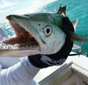 mackerel close-up