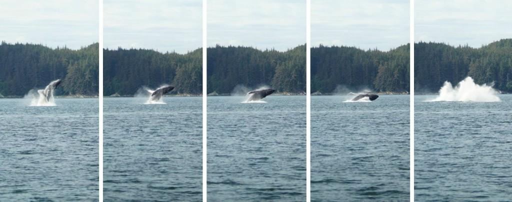 Juneau - Whale Watching Cruise