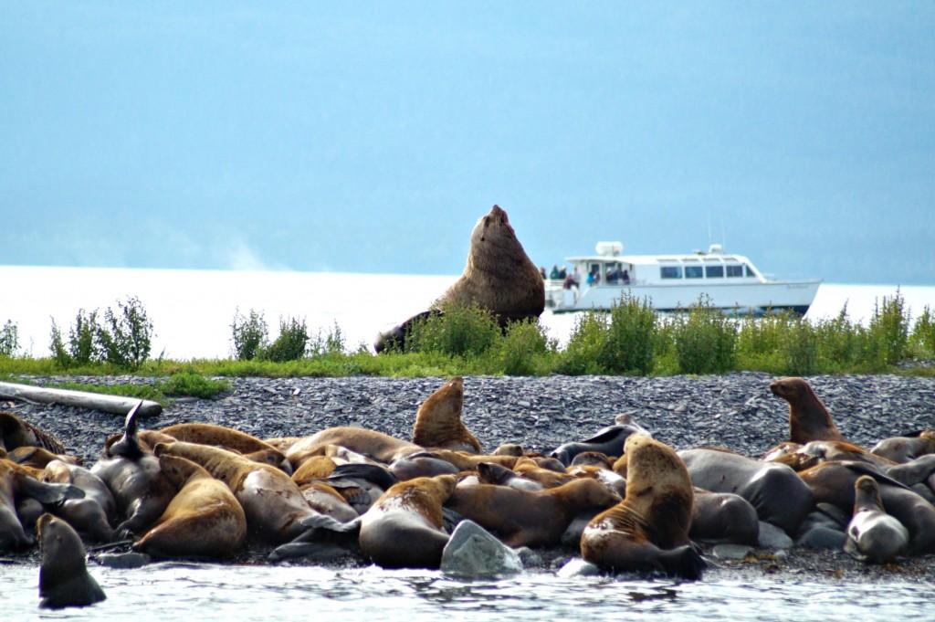 Juneau - Seals