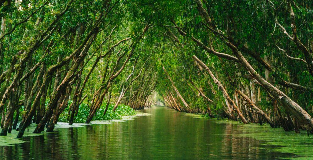 Amazonas COVID-19
