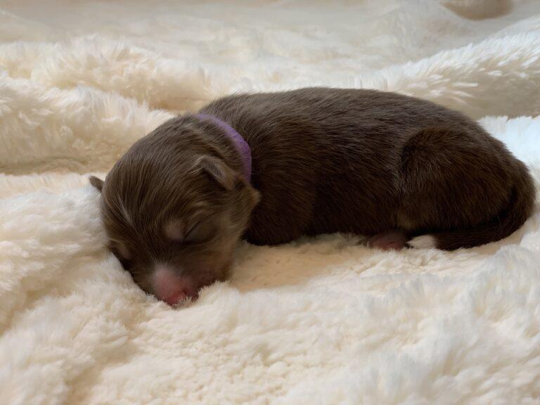 4th Puppy born