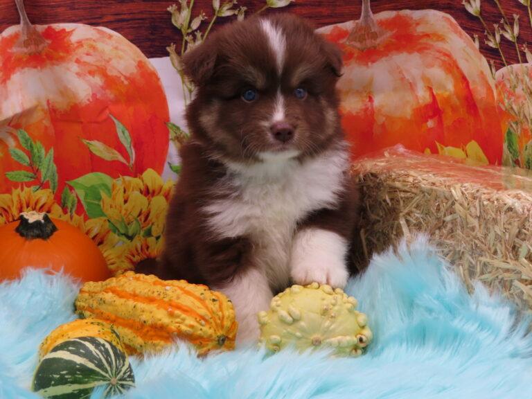 Emerald @ 5 weeks old