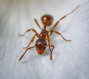 Ant Removal Rolling Meadows IL
