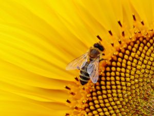 Bee Removal Warrenville IL