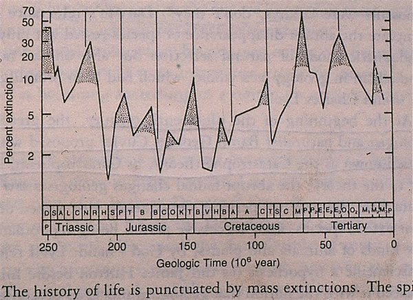 Figure 10. Extinction cycles during the past 250 million years, after Raup