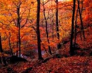 Image of Fall trees in Connecticut