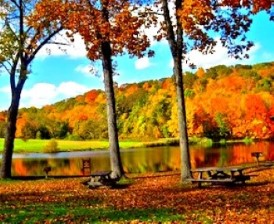 Image of fall trees overlooking water