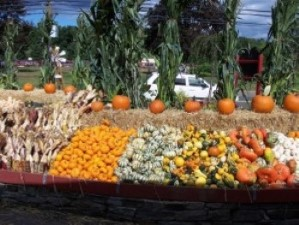 Image of pumpkin patch in Easton CT