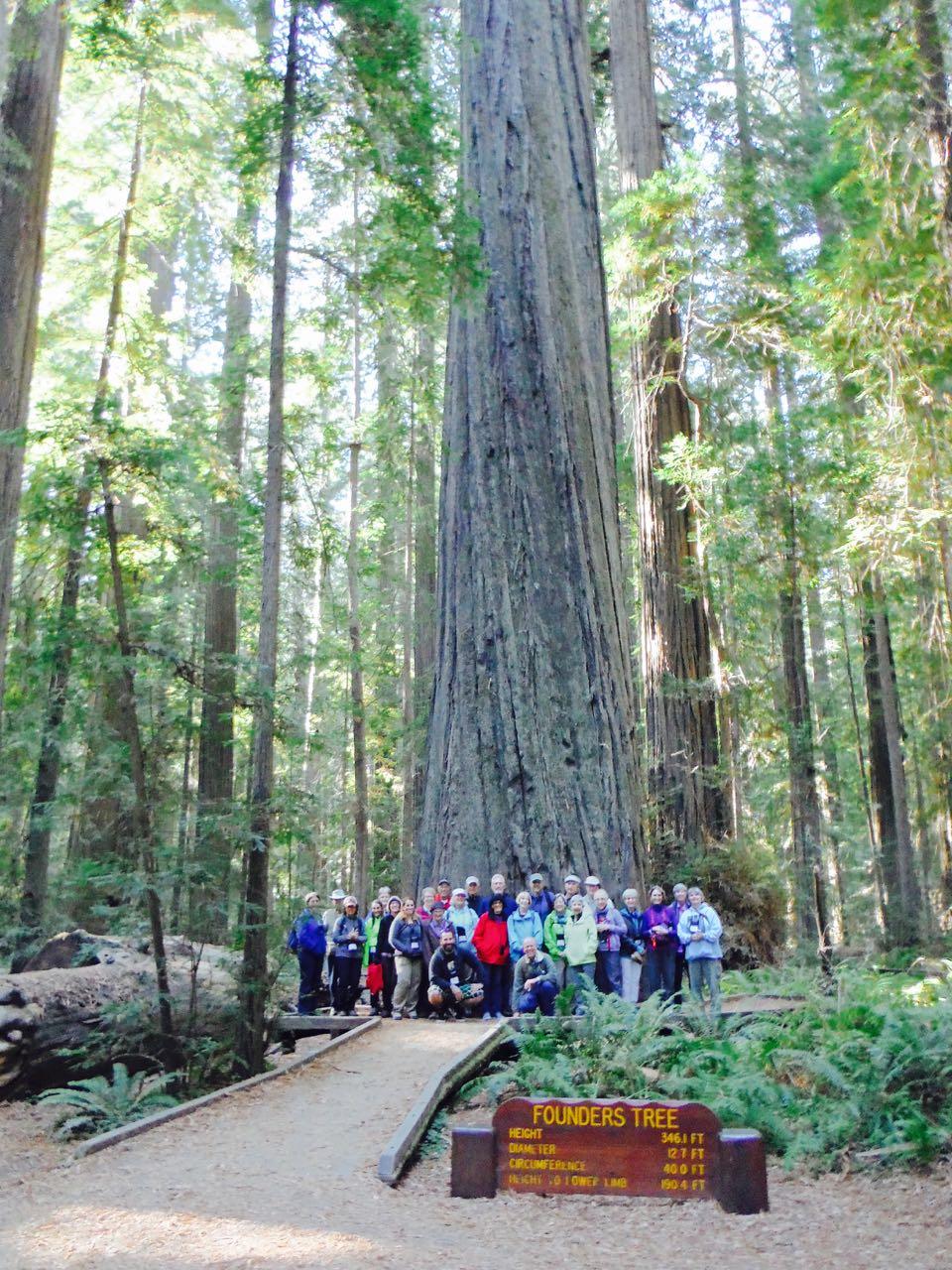 Redwoods 2017 10 01 1 Of 244