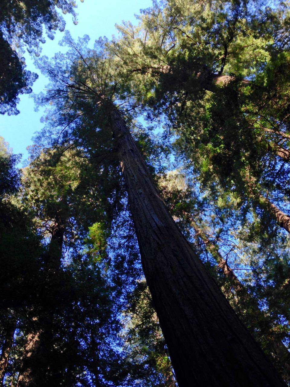 Redwoods 2017 10 01 10 Of 244
