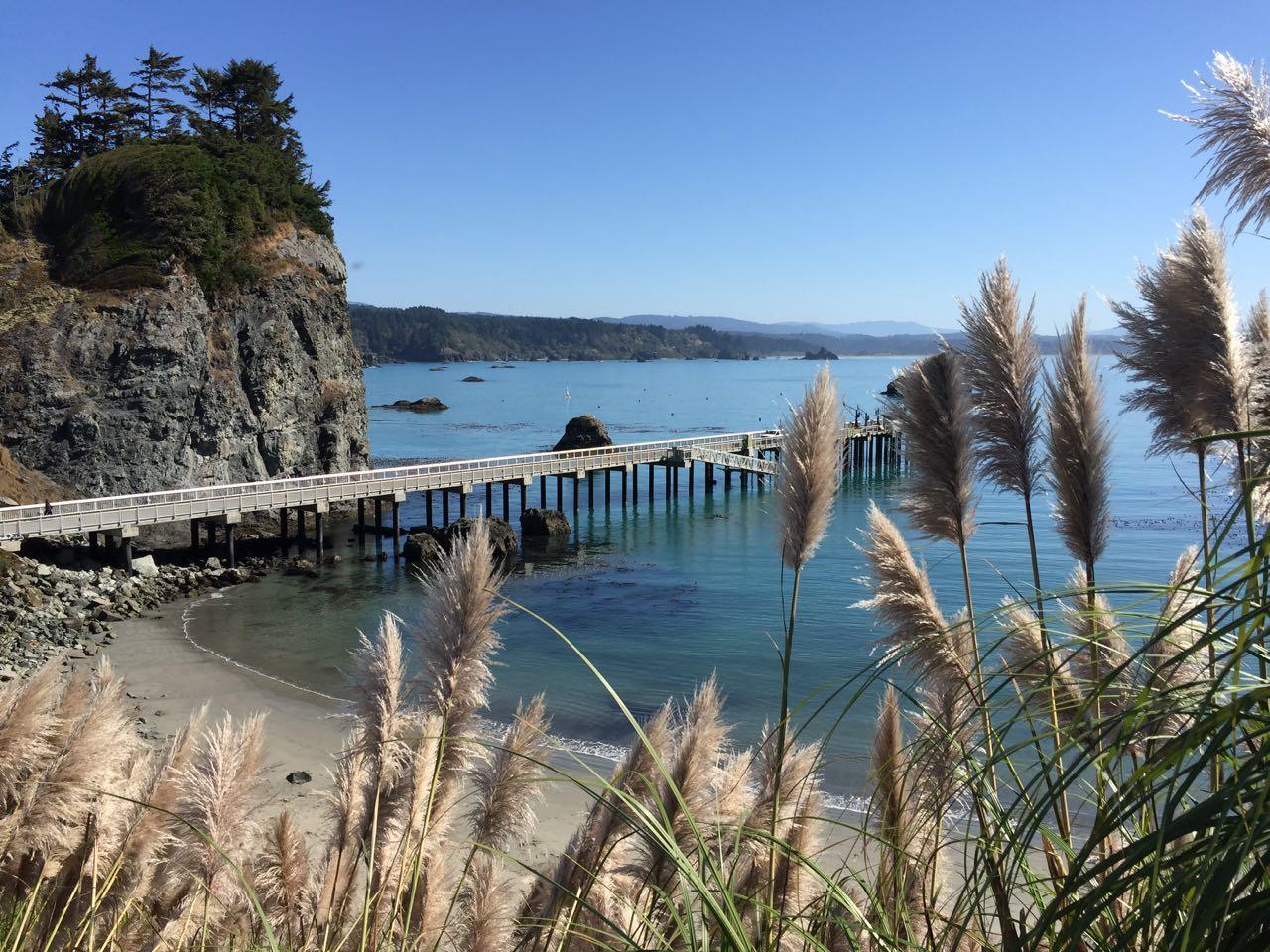 Redwoods 2017 10 01 123 Of 244