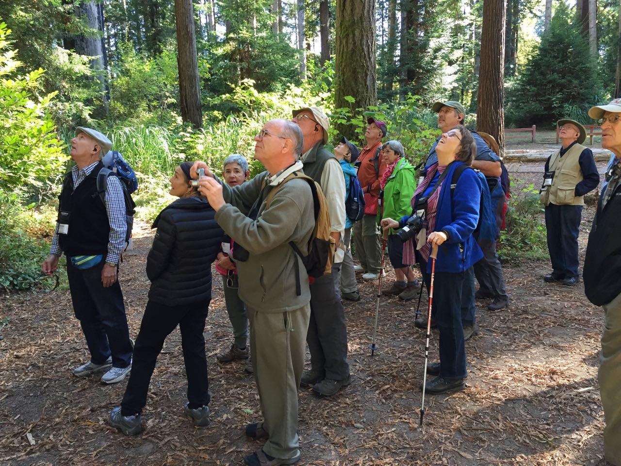 Redwoods 2017 10 01 13 Of 244