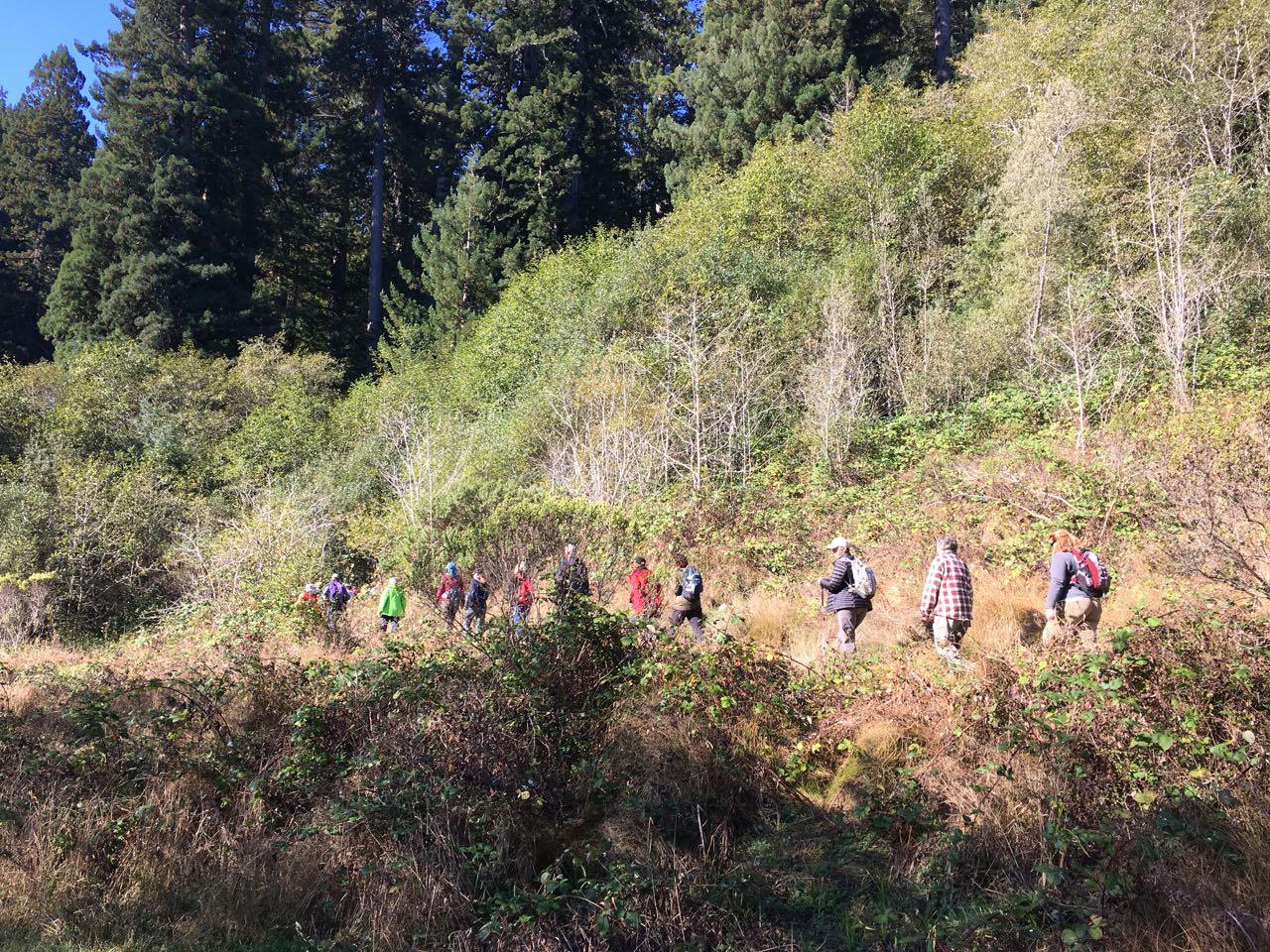 Redwoods 2017 10 01 156 Of 244