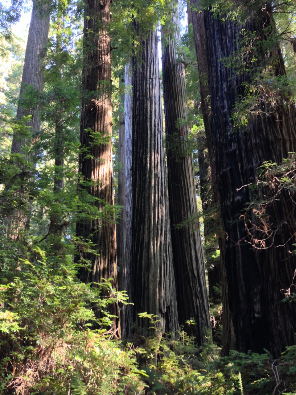 Redwoods 2017 10 01 158 Of 244