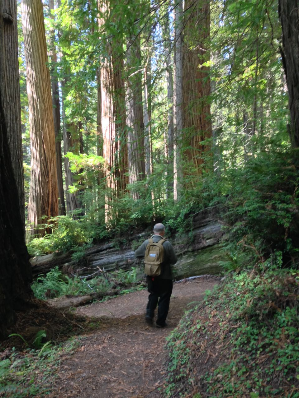 Redwoods 2017 10 01 159 Of 244
