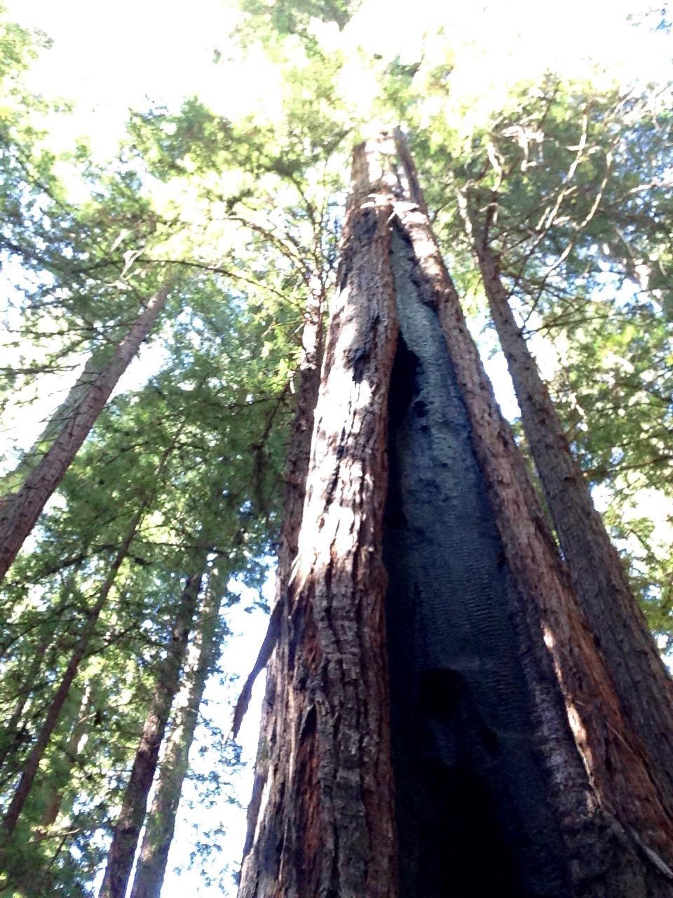 Redwoods 2017 10 01 16 Of 244