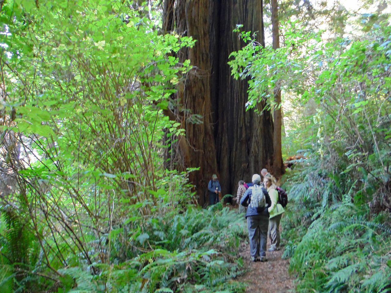 Redwoods 2017 10 01 160 Of 244