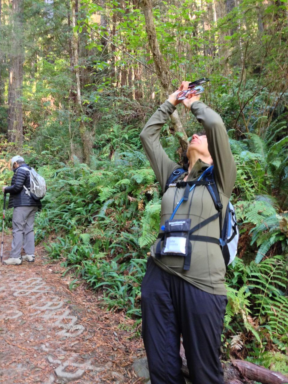 Redwoods 2017 10 01 161 Of 244