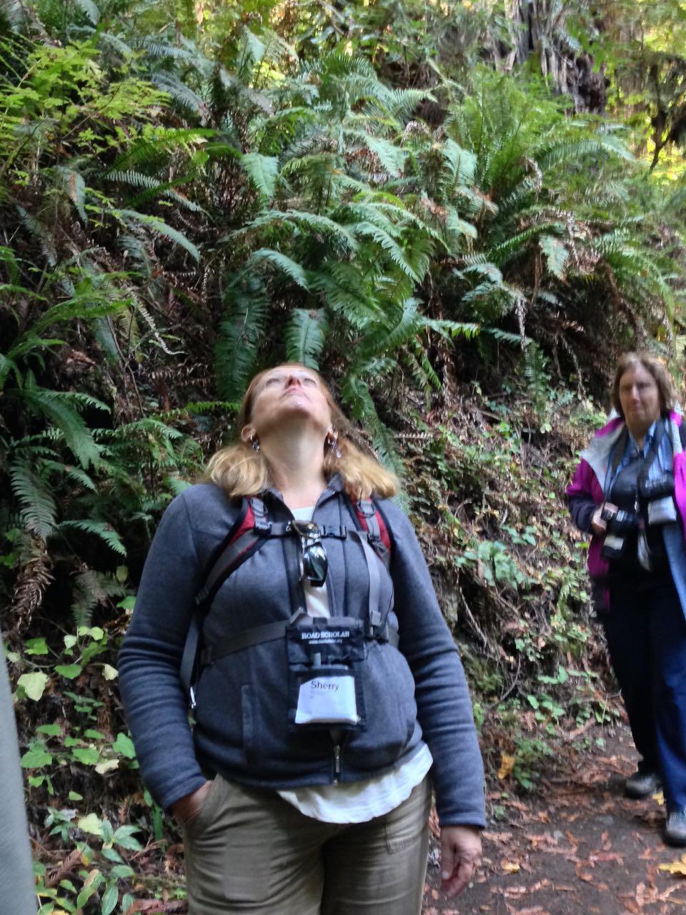 Redwoods 2017 10 01 165 Of 244