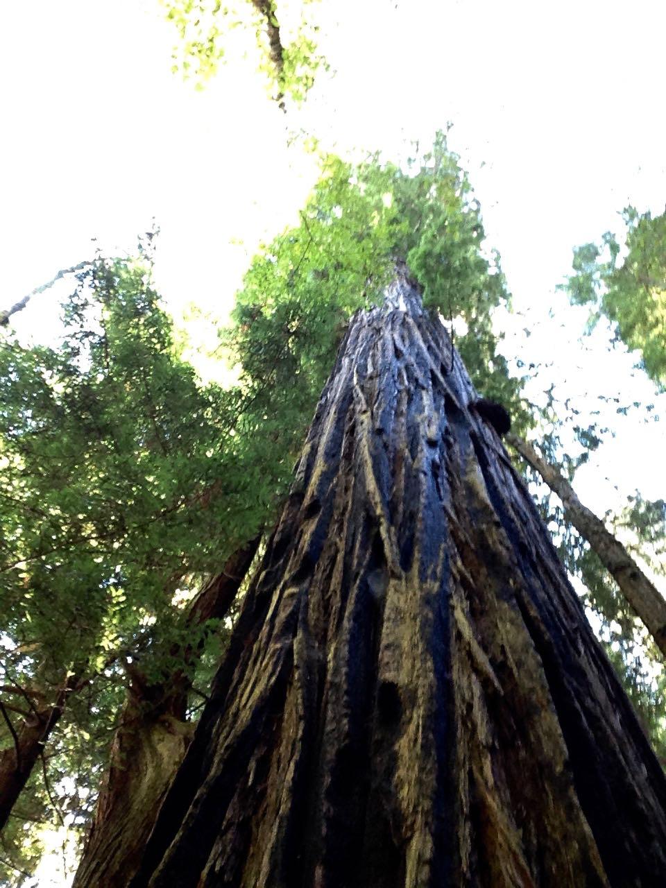 Redwoods 2017 10 01 166 Of 244