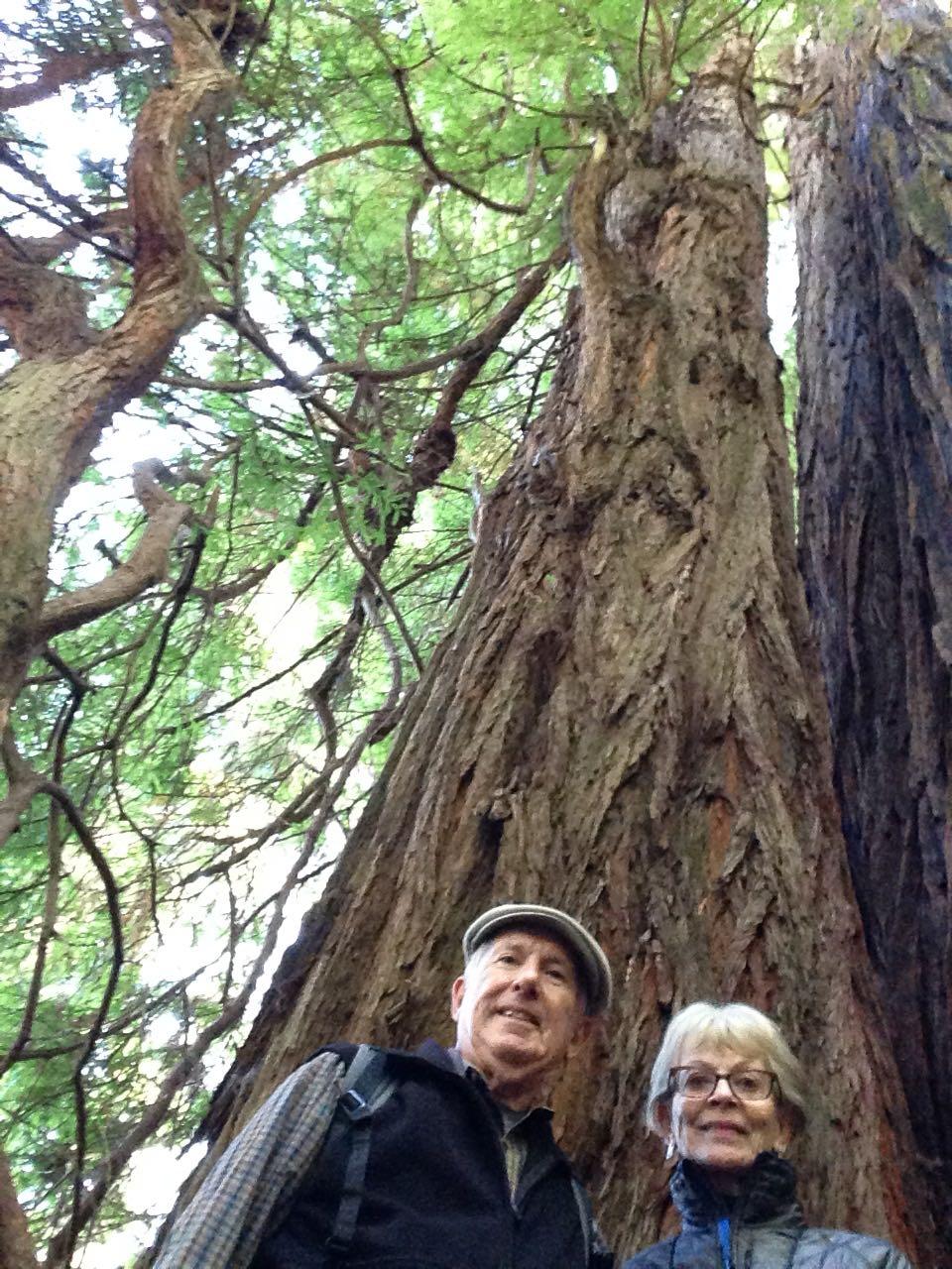 Redwoods 2017 10 01 169 Of 244