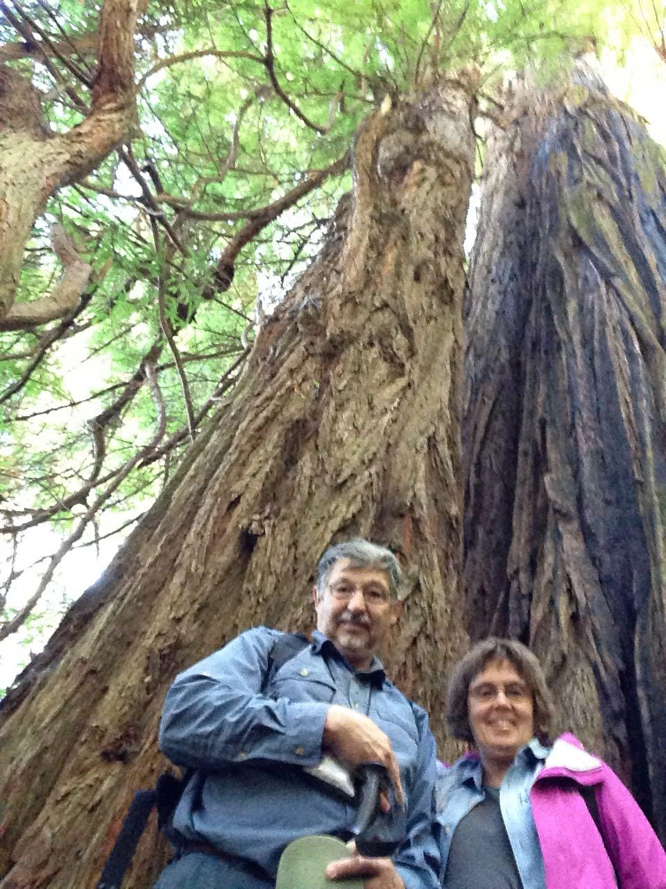 Redwoods 2017 10 01 170 Of 244
