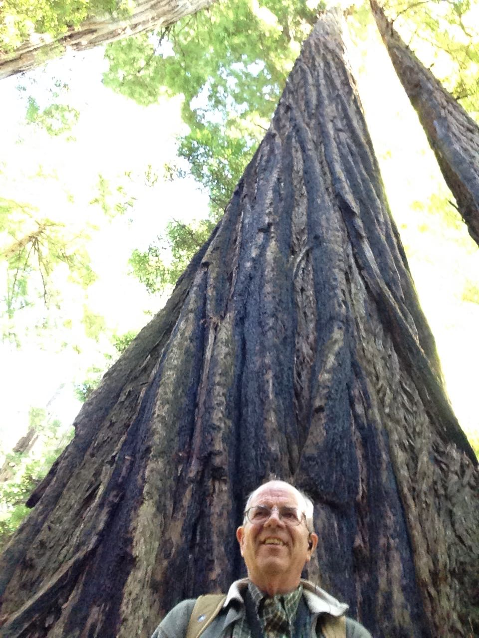 Redwoods 2017 10 01 171 Of 244