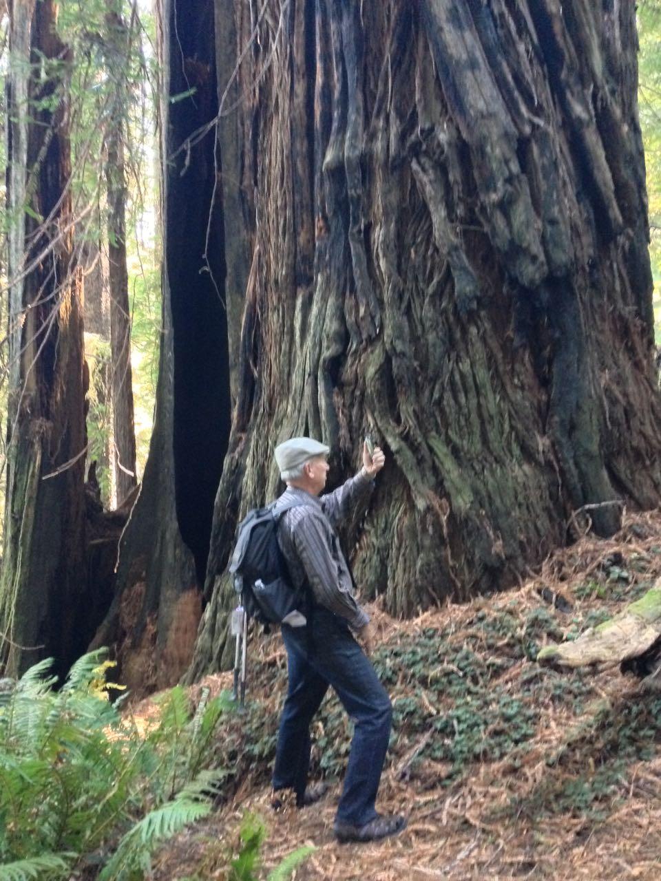 Redwoods 2017 10 01 172 Of 244