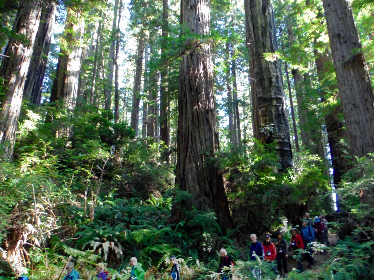 Redwoods 2017 10 01 173 Of 244