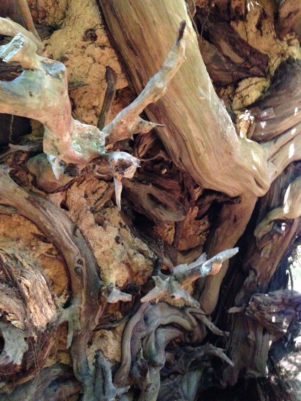 Redwoods 2017 10 01 176 Of 244