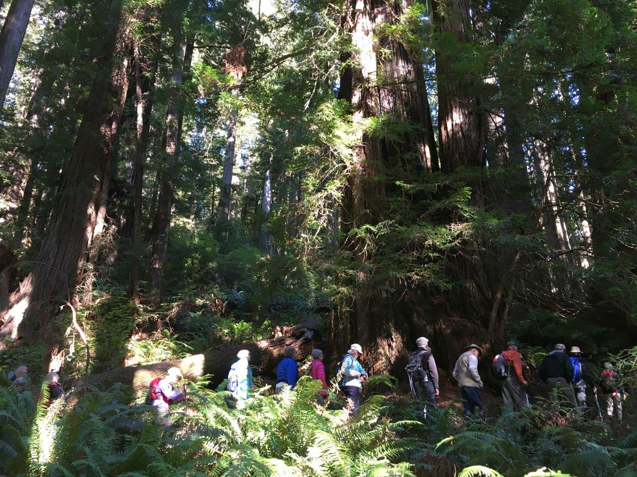 Redwoods 2017 10 01 180 Of 244