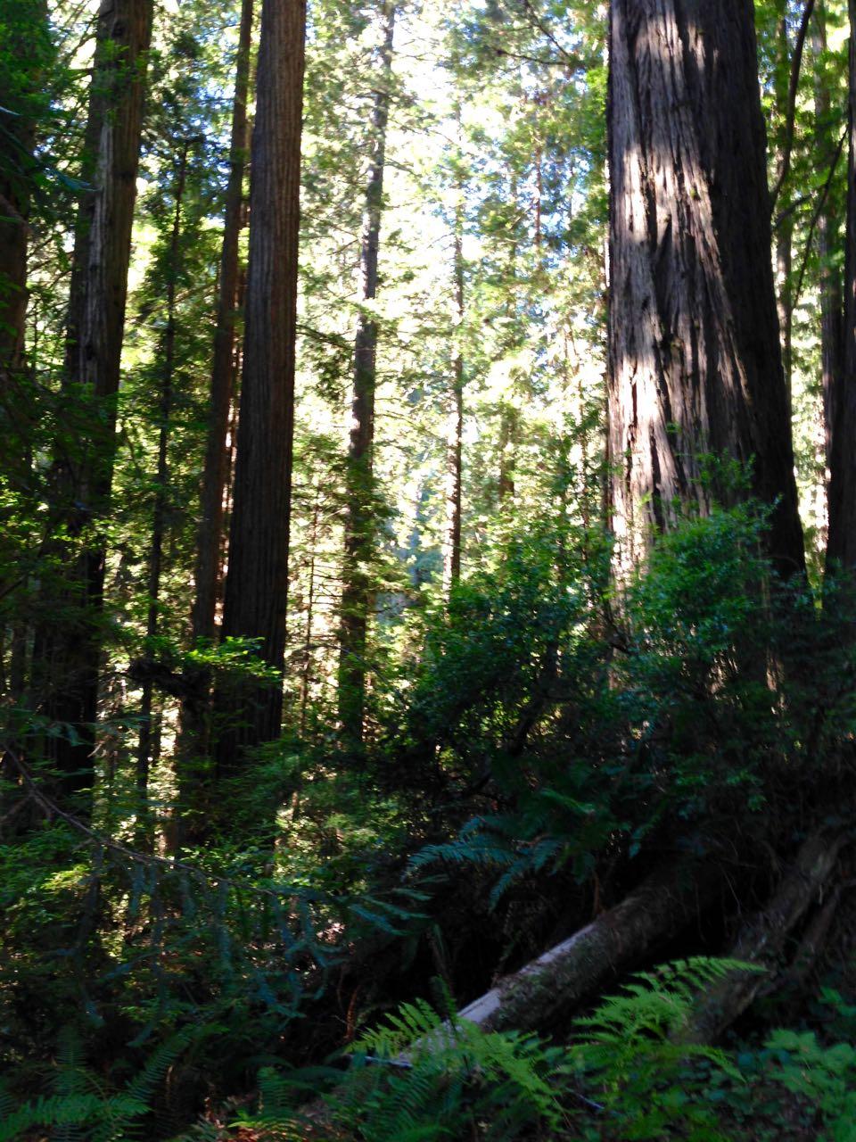 Redwoods 2017 10 01 181 Of 244