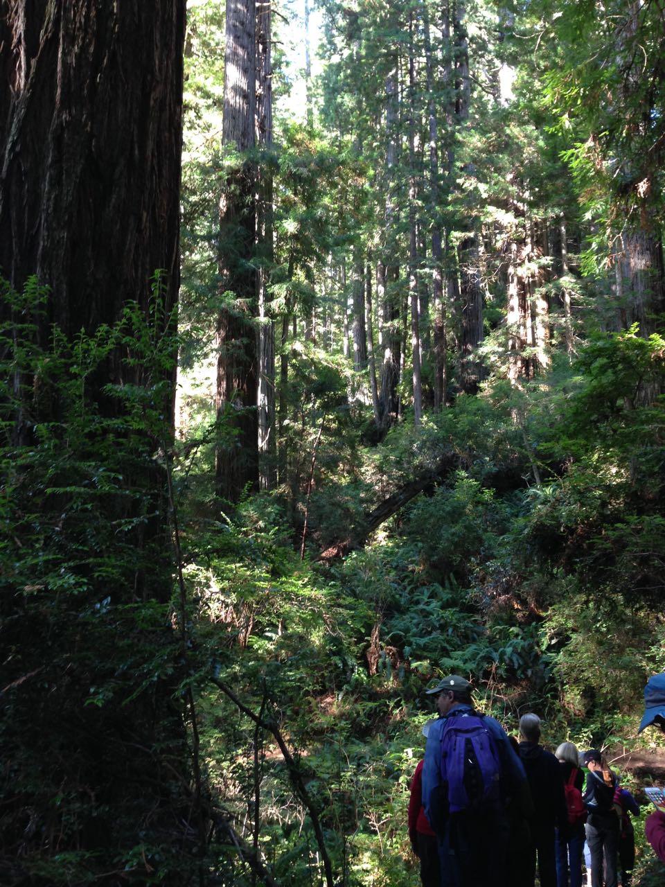 Redwoods 2017 10 01 183 Of 244