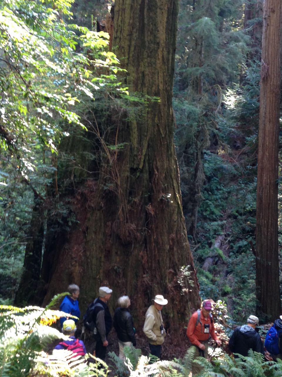 Redwoods 2017 10 01 187 Of 244