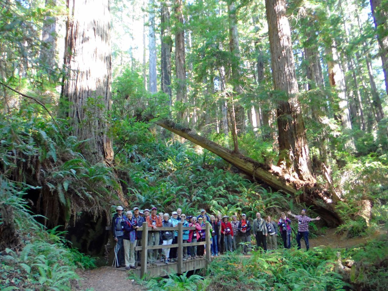 Redwoods 2017 10 01 188 Of 244