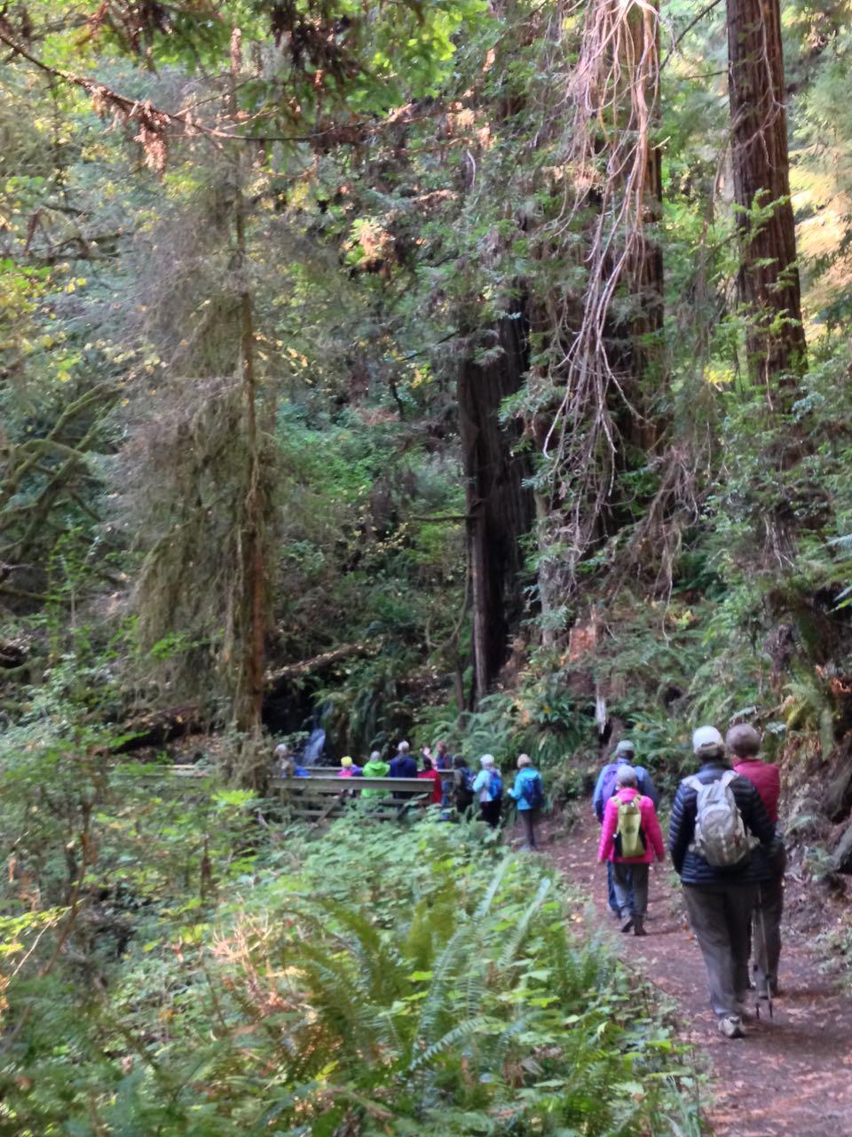 Redwoods 2017 10 01 189 Of 244