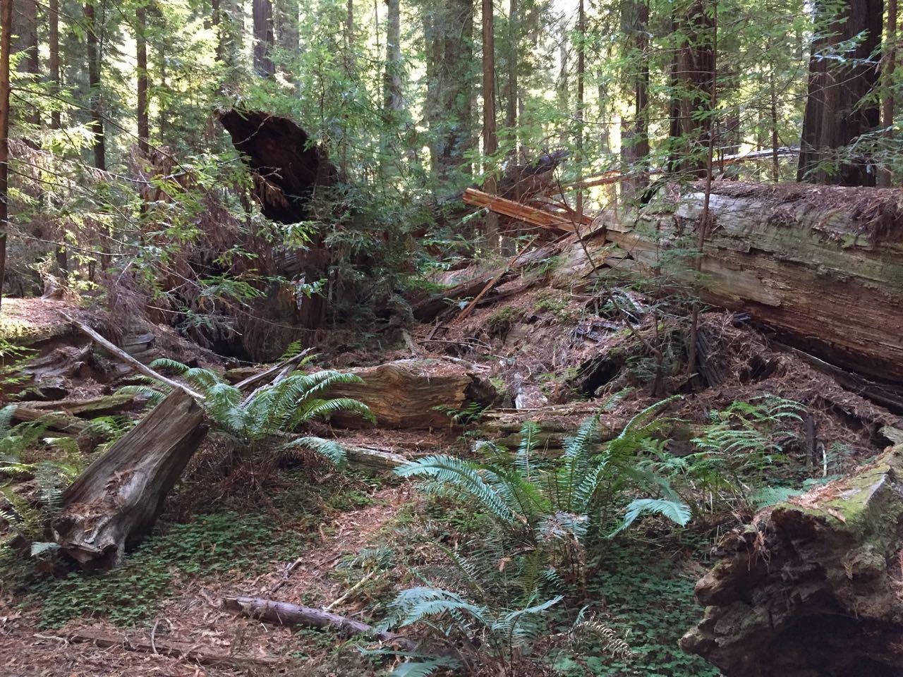 Redwoods 2017 10 01 19 Of 244