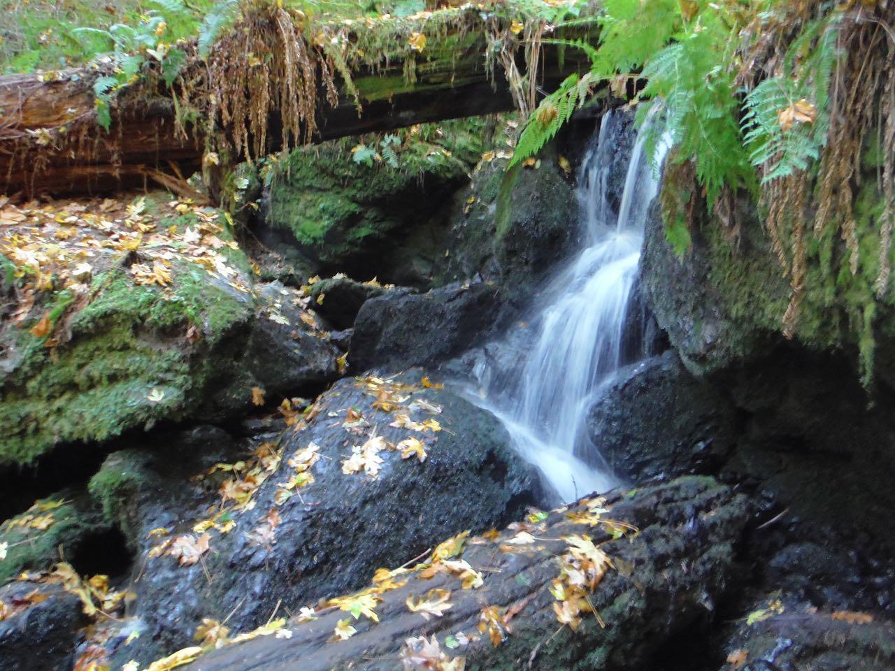Redwoods 2017 10 01 191 Of 244