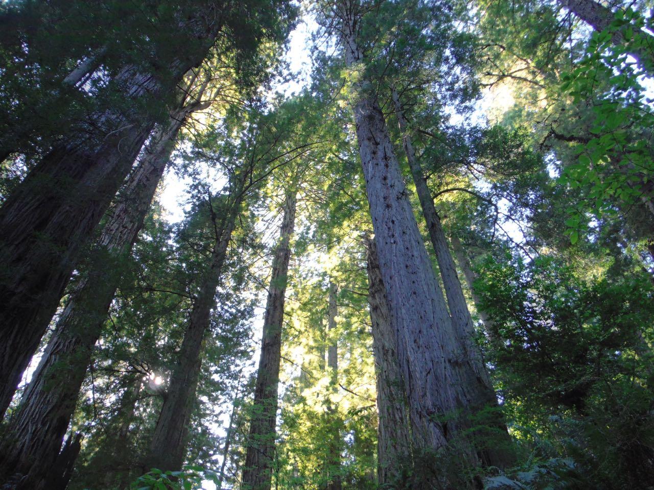 Redwoods 2017 10 01 197 Of 244