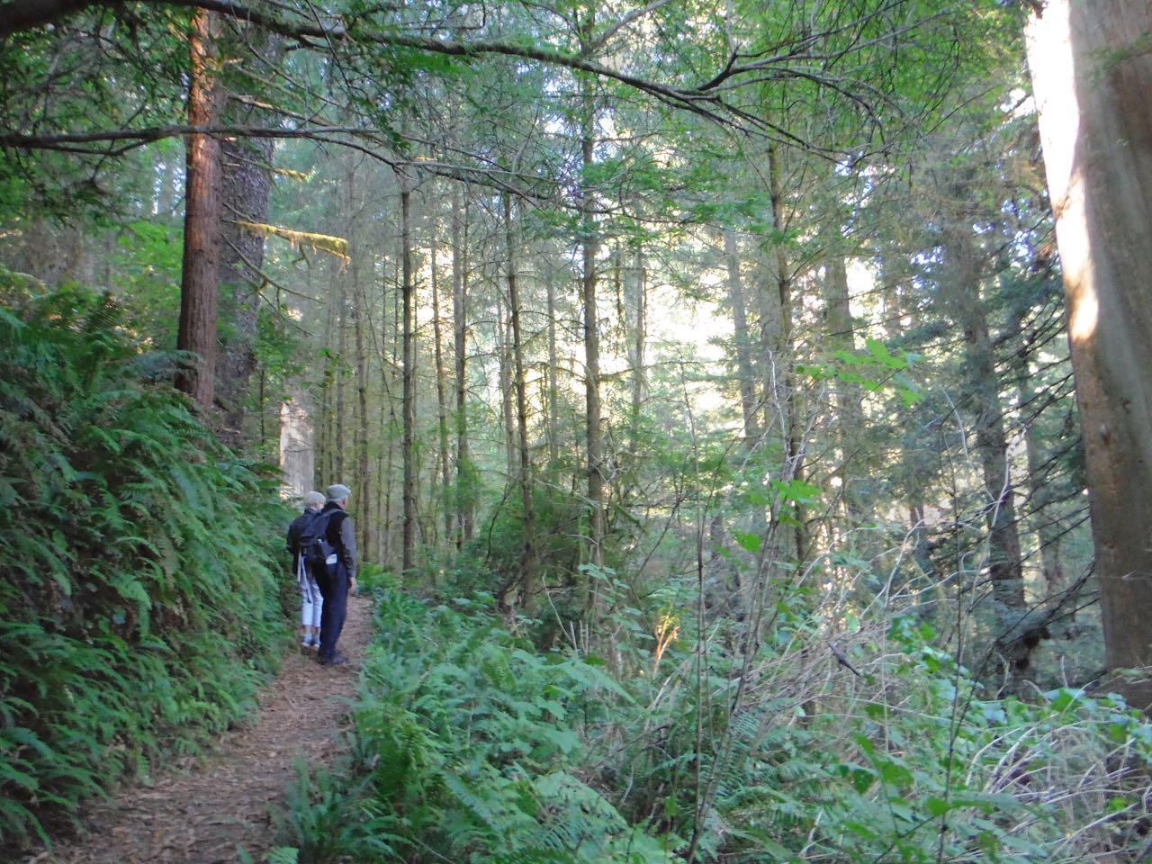 Redwoods 2017 10 01 199 Of 244