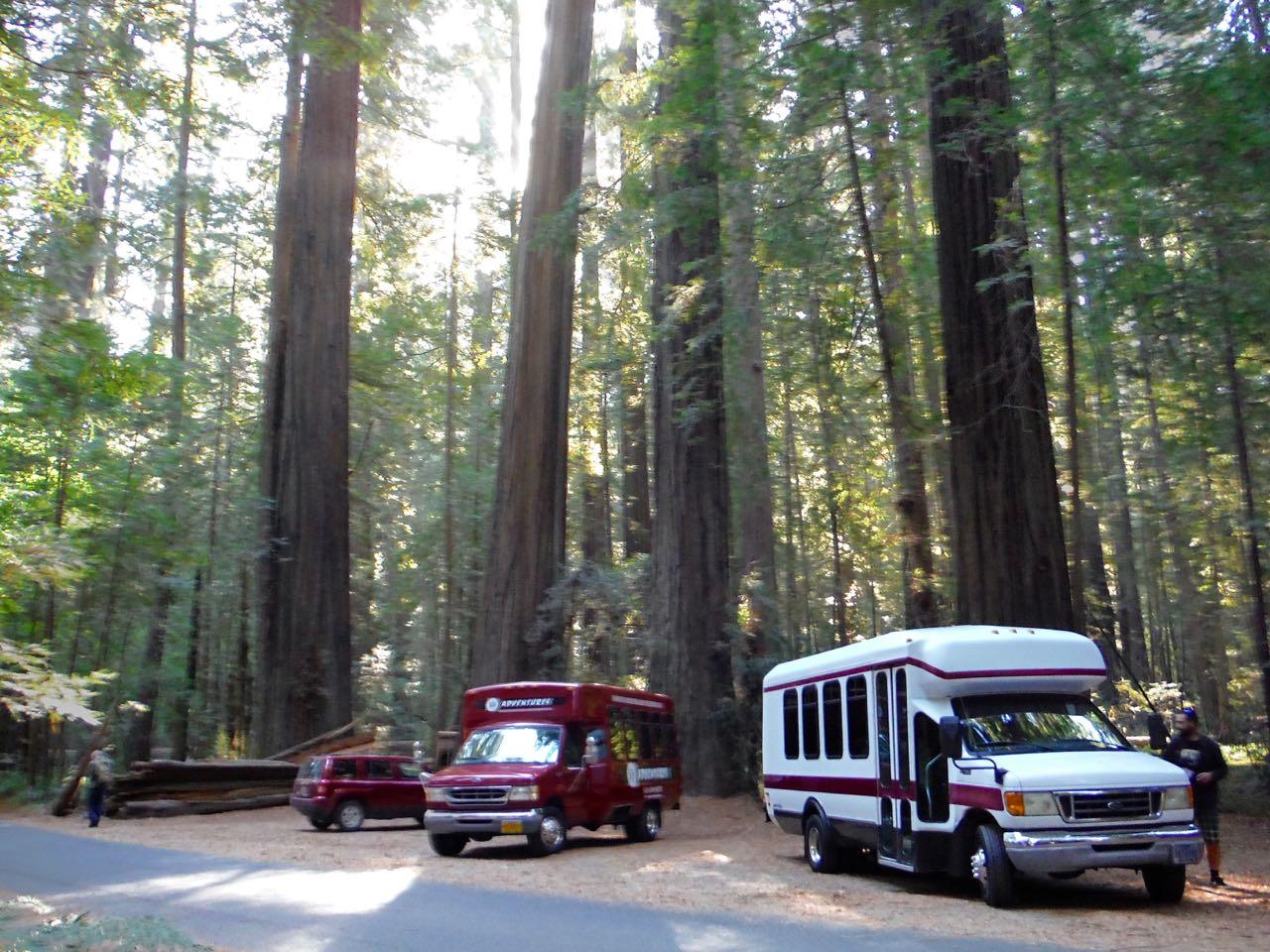 Redwoods 2017 10 01 2 Of 244