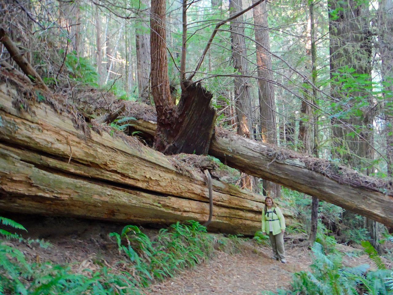 Redwoods 2017 10 01 201 Of 244