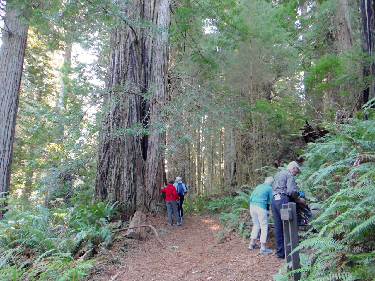 Redwoods 2017 10 01 202 Of 244