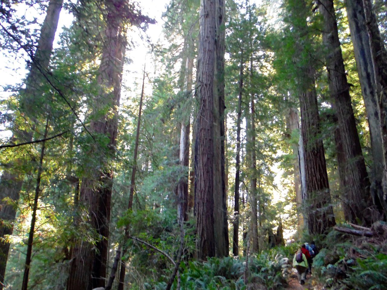 Redwoods 2017 10 01 203 Of 244