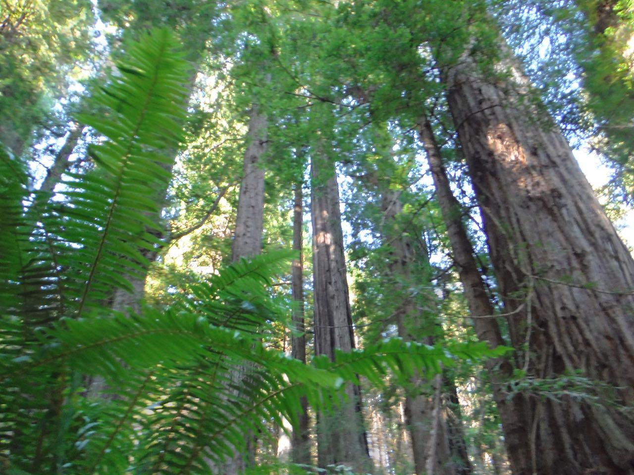 Redwoods 2017 10 01 204 Of 244