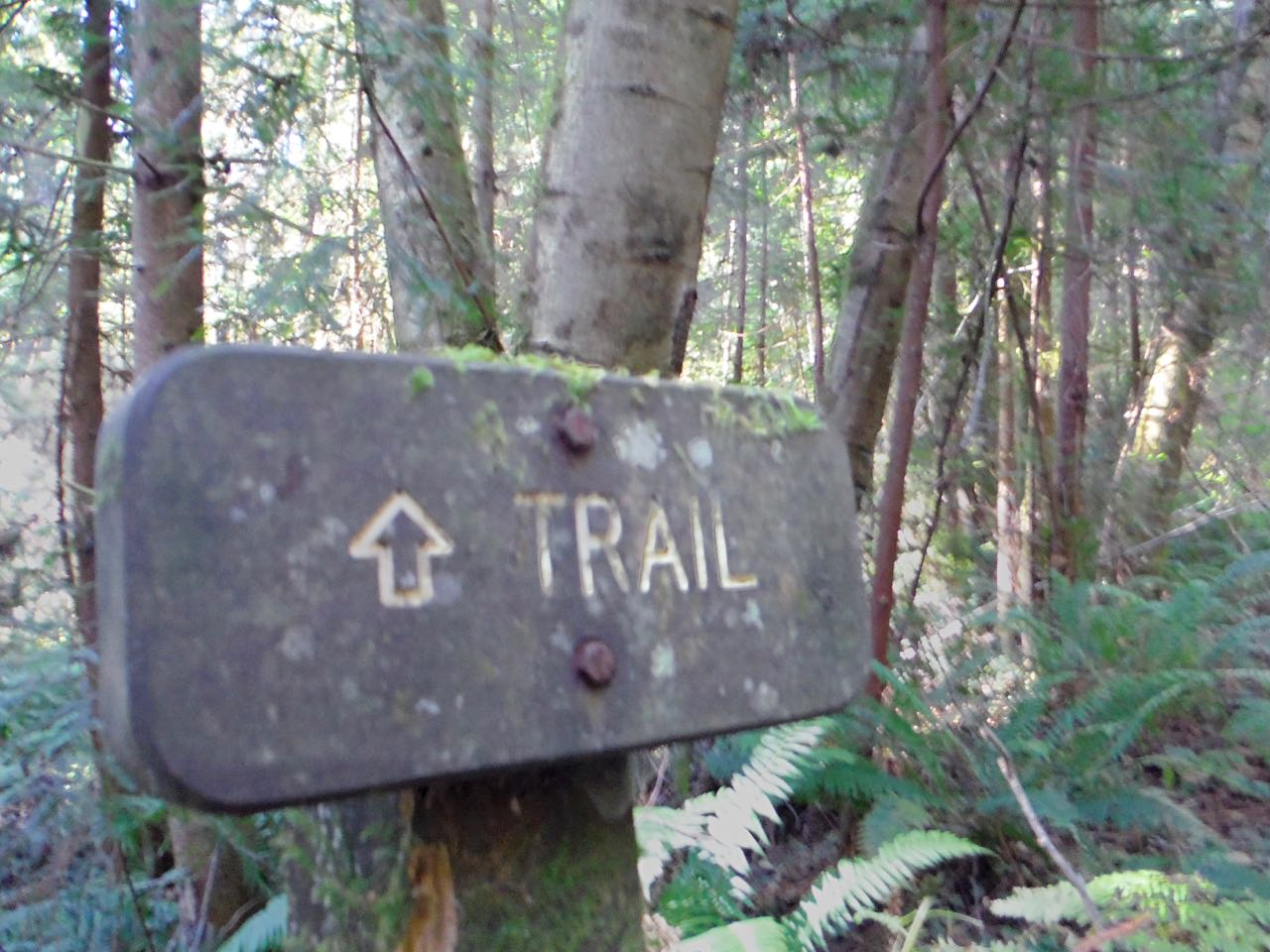 Redwoods 2017 10 01 205 Of 244