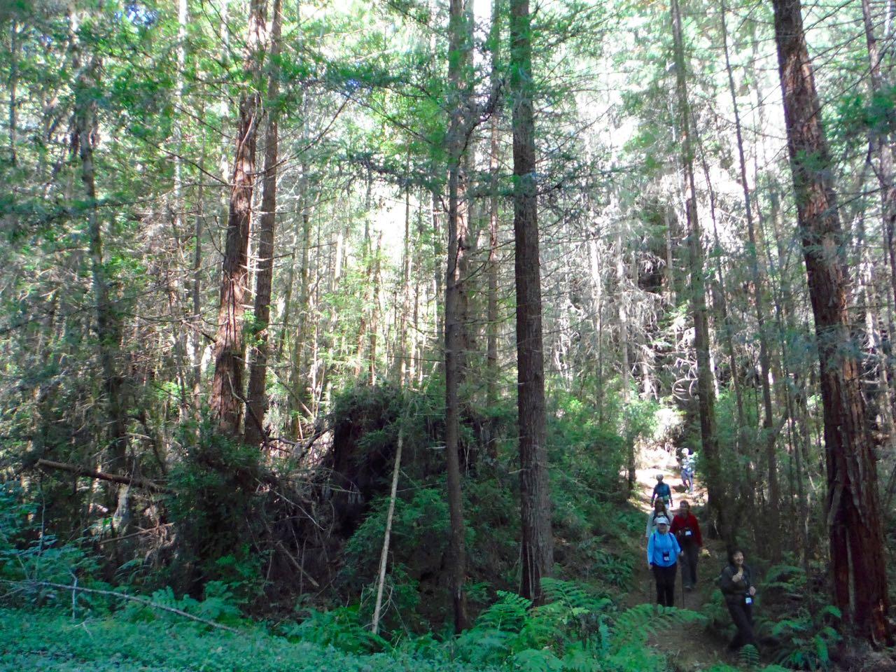Redwoods 2017 10 01 206 Of 244